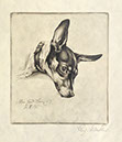 Richard Müller          (1874-1954),Mein Hund Boy- Radierung, Etching,1915 - My Dog          Boy,one of Müllers most beautiful dog-images in a          breathtaking depiction of fur, Best.Nr.          007125