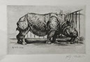 Richard Müller          (1874-1954),Rhinozeros- Radierung, Etching,1920 -          Rhinoceros,the charakter of this primeval creature is          perfectly executed, Best.Nr. 010106